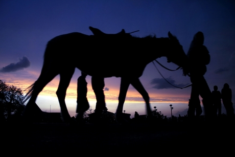 A horse on Ridge Shimla