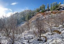 A view of an apple orchard in Himachal Pradesh during winters