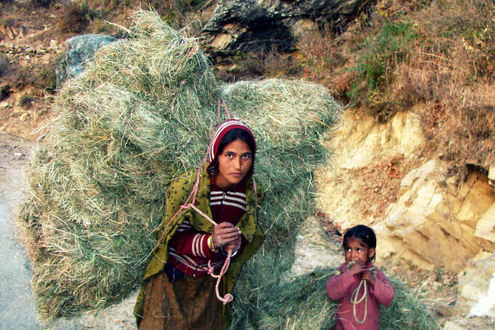 A Himachali woman carries a backload of cattle fodder near Sach Pass in Chamba district
