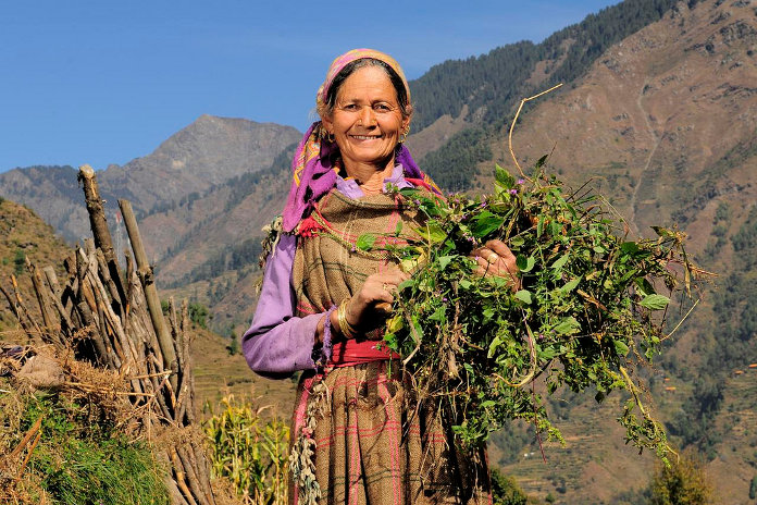 A woman clears weed from her fields in village Bejling, Himachal Pradesh