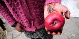 himachal fruit apple